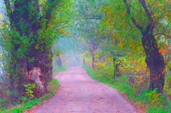 Beautiful cross processed autumn landscape road through forest Royalty Free Stock Photography