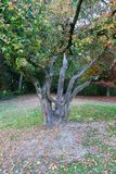 Beautiful crown of a tree taken in autumn stock photography