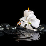 Beautiful cryogenic spa concept of delicate white hibiscus, zen Royalty Free Stock Images