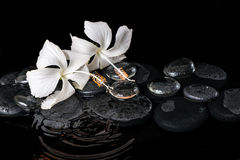 Beautiful cryogenic spa concept of delicate white hibiscus, zen Stock Images