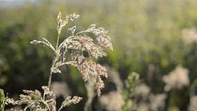 Beautiful crystal grass with dew stock video footage