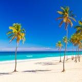 The beautiful cuban beach of Varadero. Coconut palm tree on the beautiful cuban beach of Varadero on a lovely sunny summer day Royalty Free Stock Image