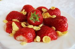 Beautiful cultivated deep red delicious strawberries, macro photography, decoration with fruit in white and rose flower. Beautiful cultivated deep red delicious royalty free stock photography