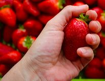 Beautiful cultivated deep red delicious strawberries, macro photography, fruit. Plenty stock photos