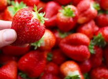 Beautiful cultivated deep red delicious strawberries, macro photography, fruit. Plenty royalty free stock photography