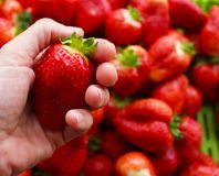 Beautiful cultivated deep red delicious strawberries, macro photography, fruit. Plenty stock photography