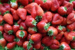 Beautiful cultivated deep red delicious strawberries, macro photography, fruit. Plenty royalty free stock photo