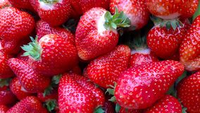Beautiful cultivated deep red strawberries, macro photography, food and fruit. Delicious royalty free stock photos