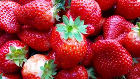 Beautiful cultivated deep red strawberries, macro photography, food and fruit. Delicious royalty free stock photo