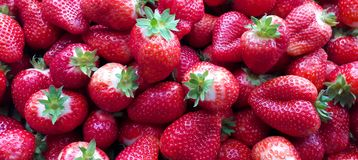 Beautiful cultivated deep red strawberries, macro photography, food and fruit. Delicious stock photo