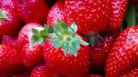Beautiful cultivated deep red strawberries, macro photography, food and fruit. Delicious stock photos