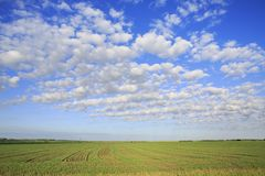 Beautiful cumulus cirrus clouds over field Stock Photos
