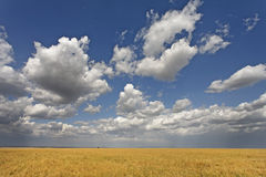 Beautiful cumulus clouds Stock Photography