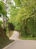 Beautiful curve asphalt road view  in doi Angkhang mountain , Ch Royalty Free Stock Images