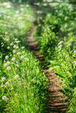 Beautiful curvy path. In countryside in the morning Royalty Free Stock Photography