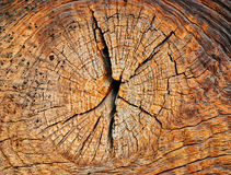 Beautiful cut of tree. Interesting brown wooden structure for a background Stock Photography