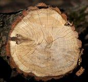 Beautiful cut of a tree Stock Image