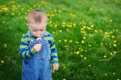 Beautiful cute boy in the park blowing on dandelion spring time Stock Image