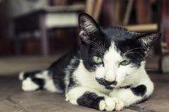 Beautiful cute cat green eye. Beautiful cute cat. green eye cat. Domestic cat portrait. Cat life. vintage tone Stock Images