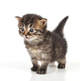 Beautiful cute 20 days old kitten sitting Stock Photo