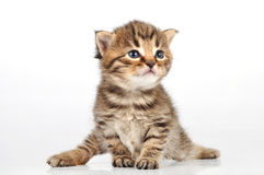Beautiful cute 20 days old kitten sitting Stock Images