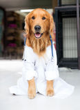 Dog as the vet Stock Image
