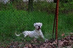 Beautiful cute dog is guarding property in the forest royalty free stock images