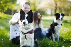 Beautiful cute dog in nature taken for walk by people. Beautiful cute dog in nature taken for walk by couple stock image