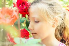 Beautiful and cute girl in the garden with roses, blonde girl enjoys the beauty and aroma of red roses.  royalty free stock image