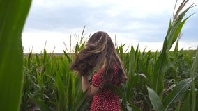 Beautiful cute girl in red dress looking into camera and straightening her long brown hair in corn field. Attractive. Young woman in sunglasses standing in stock footage