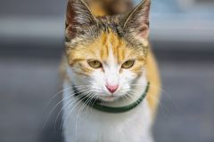 Beautiful and cute kitten. street beautiful cat. Profile picture of a lovely kitten royalty free stock images