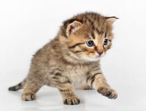Beautiful cute kitten walking alone Stock Photos