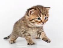 Beautiful cute kitten walking alone Stock Photos
