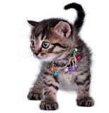 Beautiful cute one month old kitten Royalty Free Stock Photos