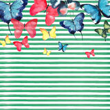 Beautiful cute sophisticated magnificent wonderful tender gentle spring colorful butterflies pattern on green lines background Stock Photography