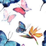 Beautiful cute sophisticated magnificent wonderful tender gentle spring colorful butterflies pattern Royalty Free Stock Photography