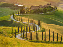 Beautiful cypress-lined road in the light of the setting sun Stock Photo