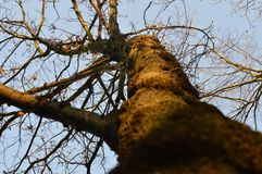 Detail of tree during sunset royalty free stock images