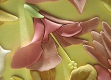 Beautiful 3D suede leather display or wallpaper with floral motifs. Horizontal shot of floral leather pattern with three-dimensional values, interesting Stock Photos