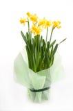 Beautiful daffodils Stock Photography