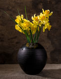 Beautiful daffodils in black vase Stock Photography