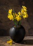 Beautiful daffodils in black vase Stock Image
