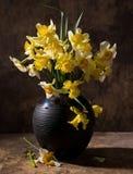 Beautiful daffodils in black vase Stock Photo