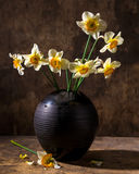 Beautiful daffodils in black vase Royalty Free Stock Images