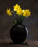 Beautiful daffodils in black vase Stock Images
