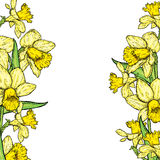 Beautiful daffodils. Vector illustration. Bouquet of spring flowers. Royalty Free Stock Photography