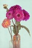 Beautiful dahlia background stock images