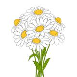 Beautiful daisies on white background. Beautiful daises on white background. Floral vector illustration Stock Photos
