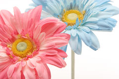 Beautiful daisies Stock Images