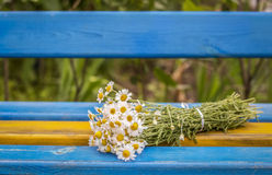 Beautiful Daisies on the bench, background Royalty Free Stock Photo